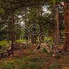Miller Cabin, Rocky Mountain National Park, Colorado - 2011