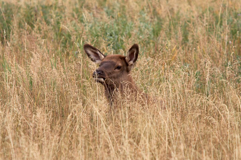 Hiding in the Grass_2061