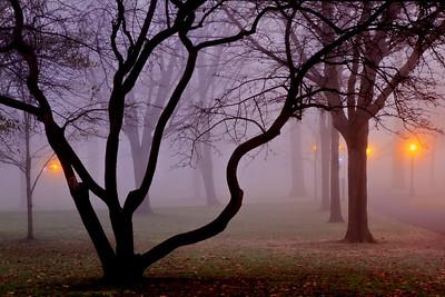 Solitudes Glow