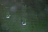 4/2012:  Close up of raindrops on screen, at home