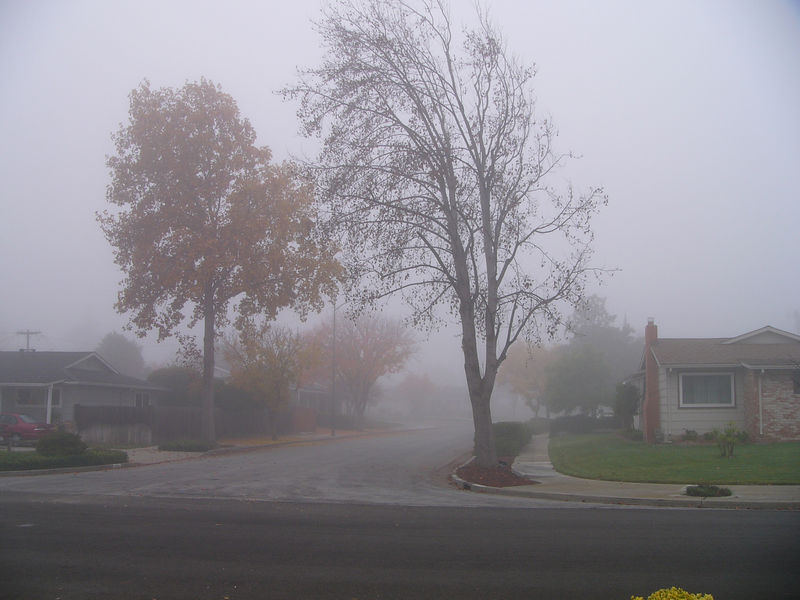 Foggy morning out my front door