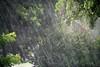 Rainstorm - Miami, FL  (August 1, 2008)