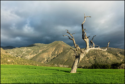 Juxtaposed Life.  The dead tree in a field of green is similar to the rocky mountains behind, just reversed.
