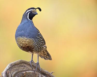 Ramrod Ranch Birds 2010