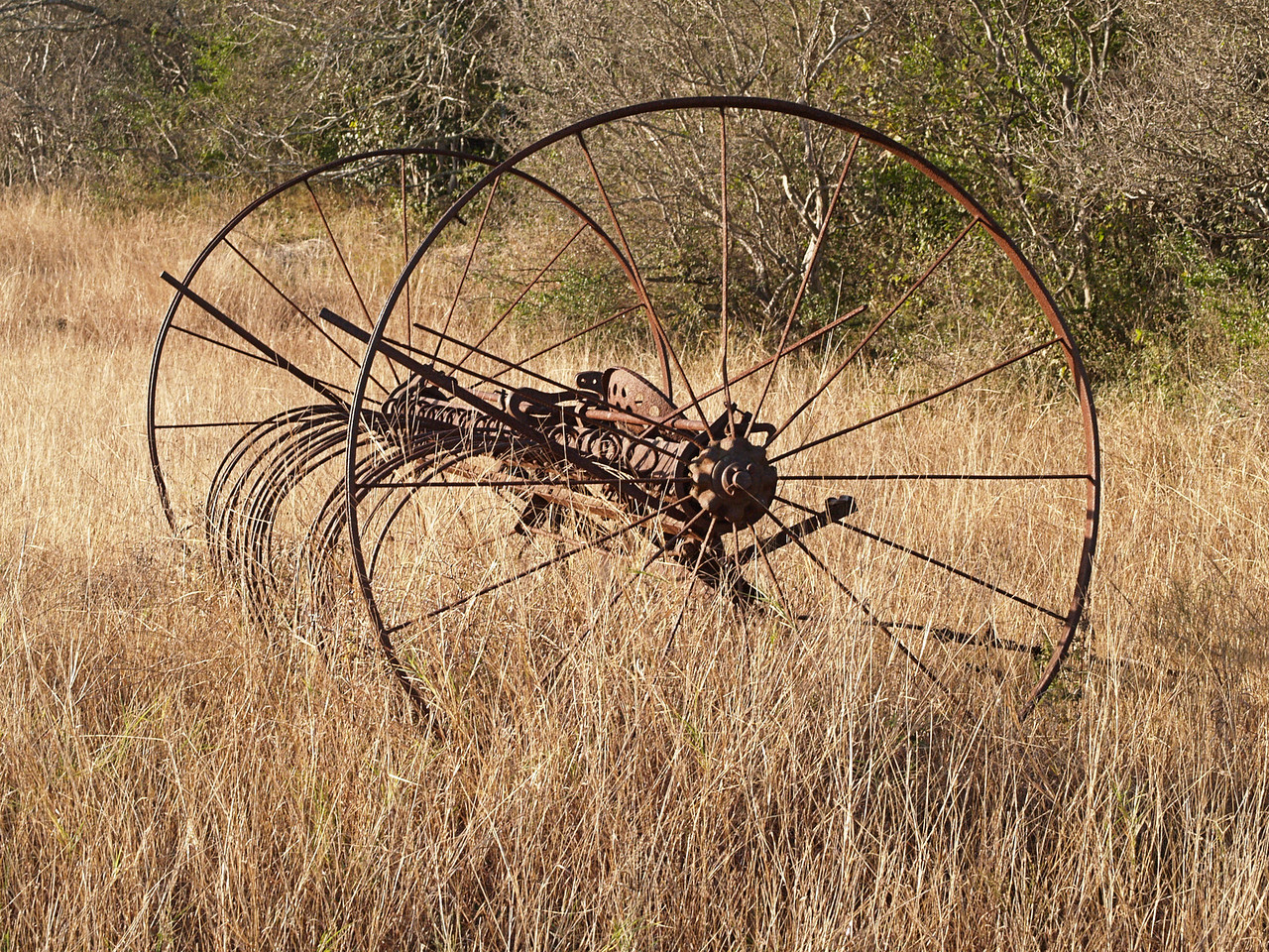 OLYMPUS DIGITAL CAMERA--An old hay rake that hasn't been moved since we parked it at this spot, thirtysomething years ago. It had probably sat at the old farmers place for at least fifty years prior to us moving it here.