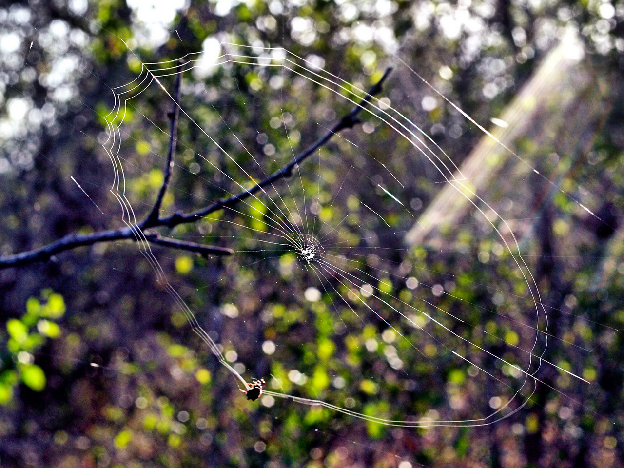 OLYMPUS DIGITAL CAMERA--Spider web in the early morning sun.