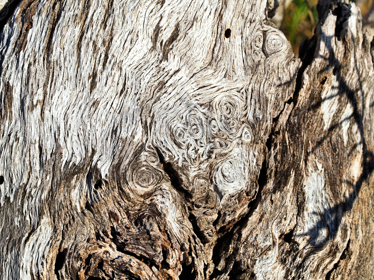 OLYMPUS DIGITAL CAMERA--Interesting swirling patterns in the dead tree.
