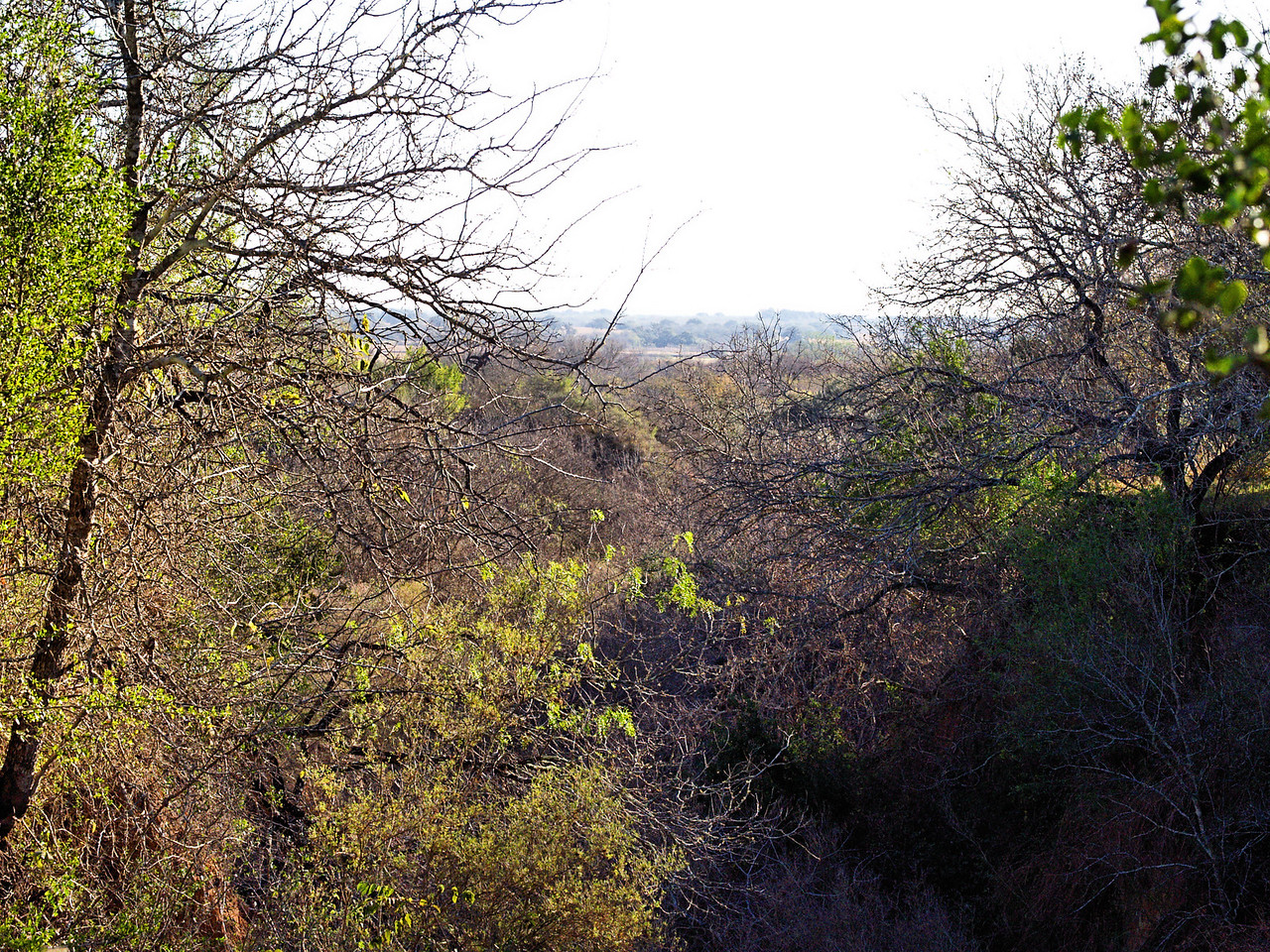 OLYMPUS DIGITAL CAMERA--Looking down into a ravine that has washed out, and grown up over the years.
