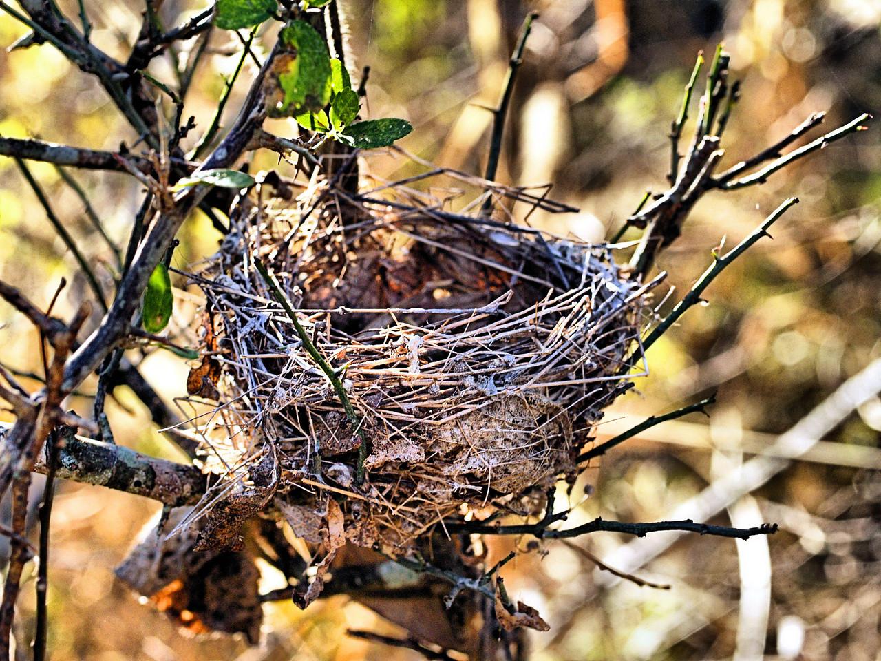 OLYMPUS DIGITAL CAMERA--Empty nest.