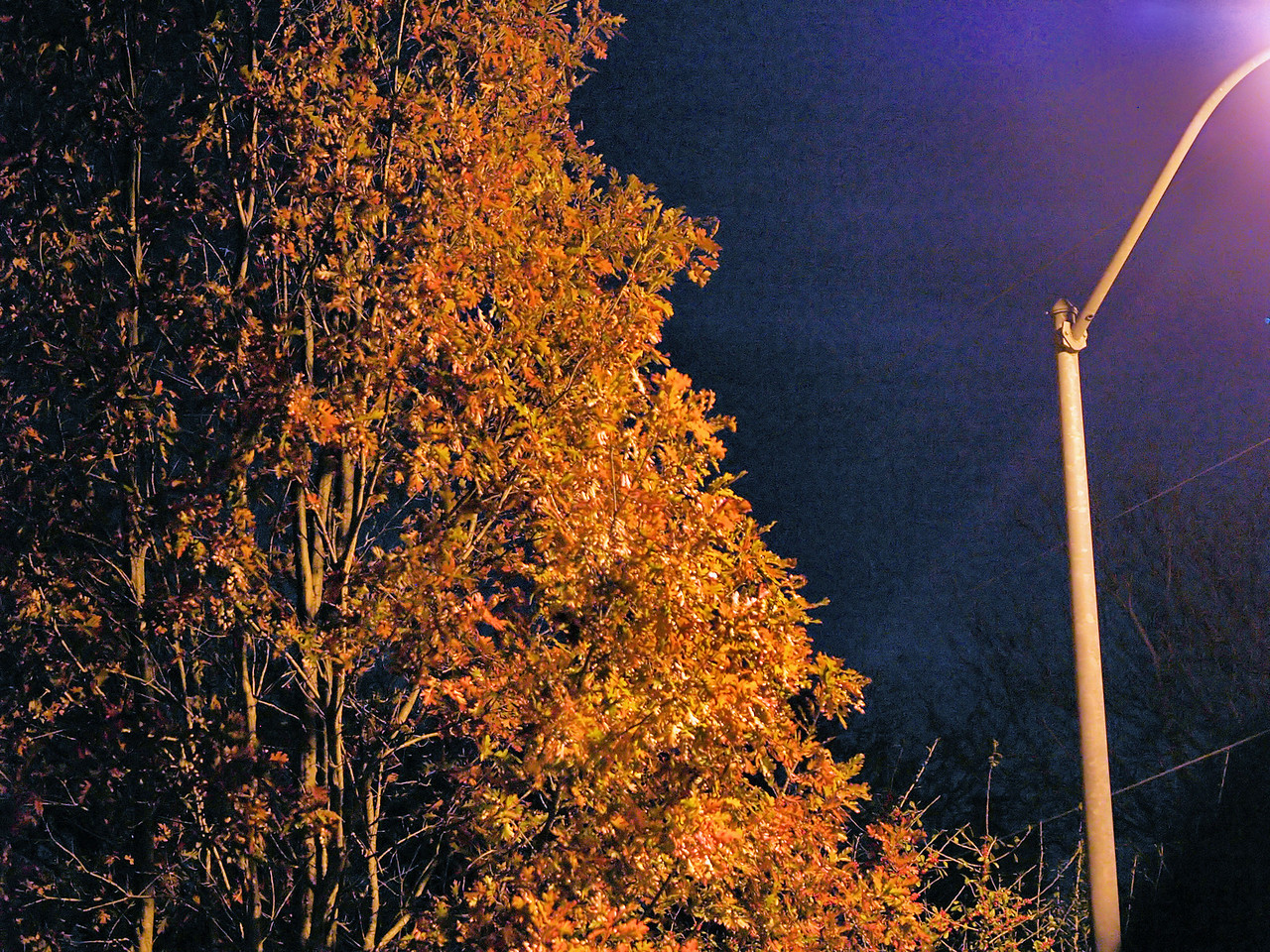 OLYMPUS DIGITAL CAMERA--Red oak tree illuminated by the street light.  The leaves will soon be gone, ready to be raked and bagged.