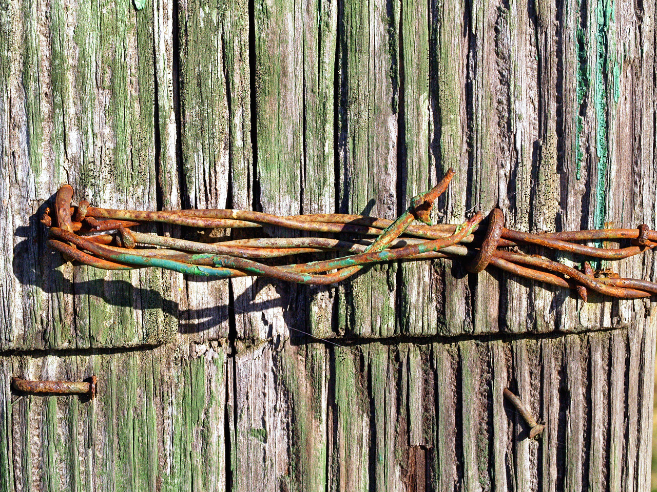 OLYMPUS DIGITAL CAMERA--Barb-wire steepled into a fence post.