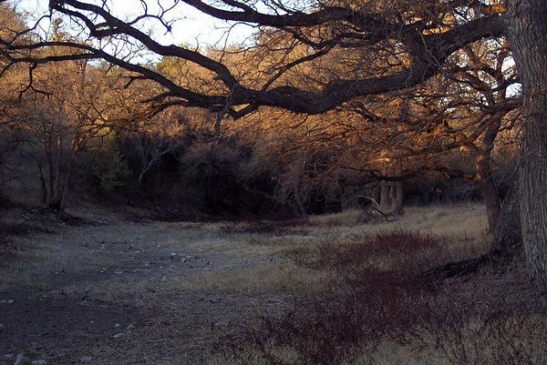dry creek - Old ranch outside of 1604, between O'Conner and Judson (2/06)