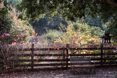 Rancho San Antonio 2016