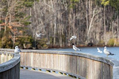 Nature. Newport News, Park, Animals, Trees
