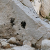 I saw this one on the Mt. Whitney Main Trail.