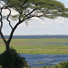 An acacia frames the floodplains.