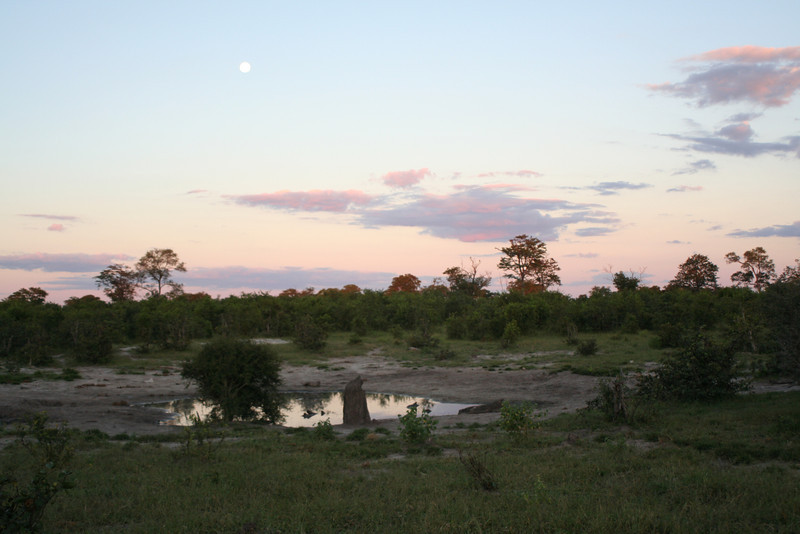 The view from our campsite. This little waterhole, which we call a pan is starting to dry up a bit, but still draws animals. Pete found this spot on google earth, so we first named them Pete's Pans, and then I decided more alliteration was needed and re-named them Pete's Pots and Pans.