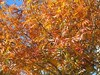 Leaves U of R fall 2003