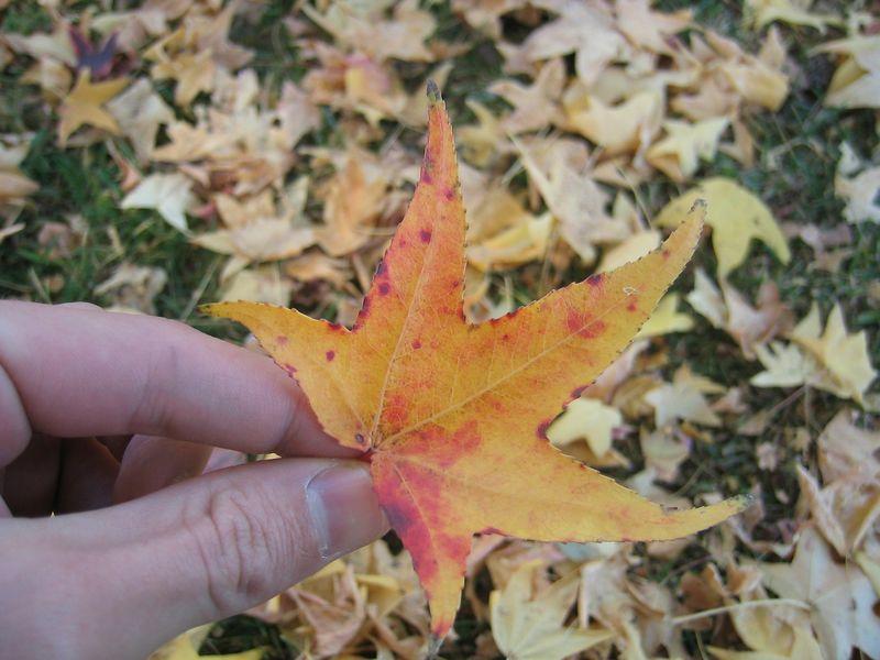 Interesting leaf.