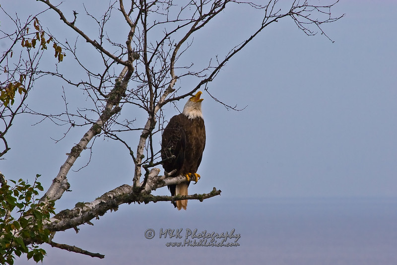 Lake Superior Eagle 2-