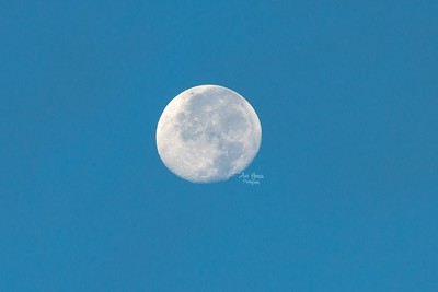No matter what time of the day, if I see a chance to capture something amazing, I go for it.   In case you missed it, here's the moon this morning with clear blue skies. It was so beautiful and I rarely take photos of the moon when the sky is still blue. So it was the perfect moment to capture.