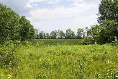 Rattray Marsh