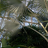 Palm House Baltimore 1