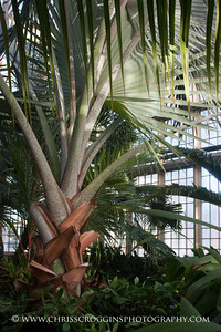 Palm House Baltimore 2