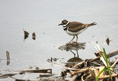 Killdeer Duck Mountains, Manitoba