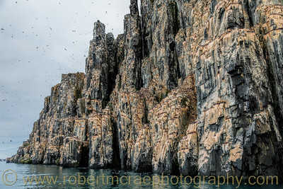 The bird cliffs at Kapp Fanshawe