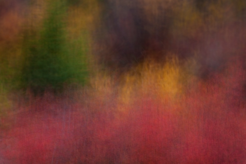 Autumn Color Abstract - lens panning