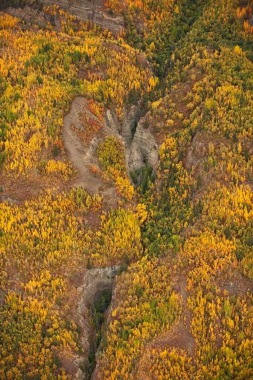 Mountain Forest, aerial view, Wrangell-St. Elias National Park, Alaska.