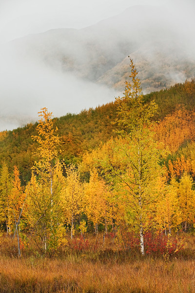 Fall Colors Along the McCarthy Road