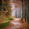 Slov autumn 56