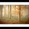 A Trees Framed-2