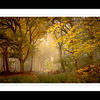 A Trees Framed