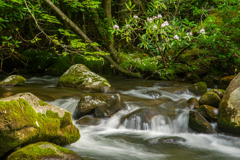 Oconaluftee River, Great Smoky Mountains National Park, NC