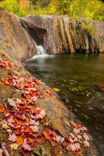 Small cascade with fallen leaves, near Rangeley, Maine