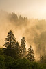 Fog and trees at sunrise, Great Smoky Mountains National Park