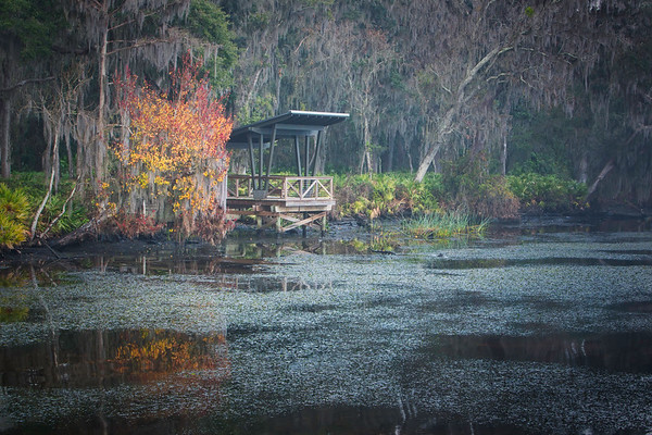 Winter on the St. Johns River