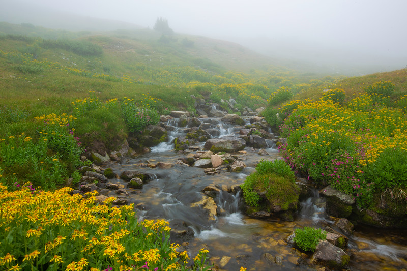 Wildflowers by a foggy mountain stream