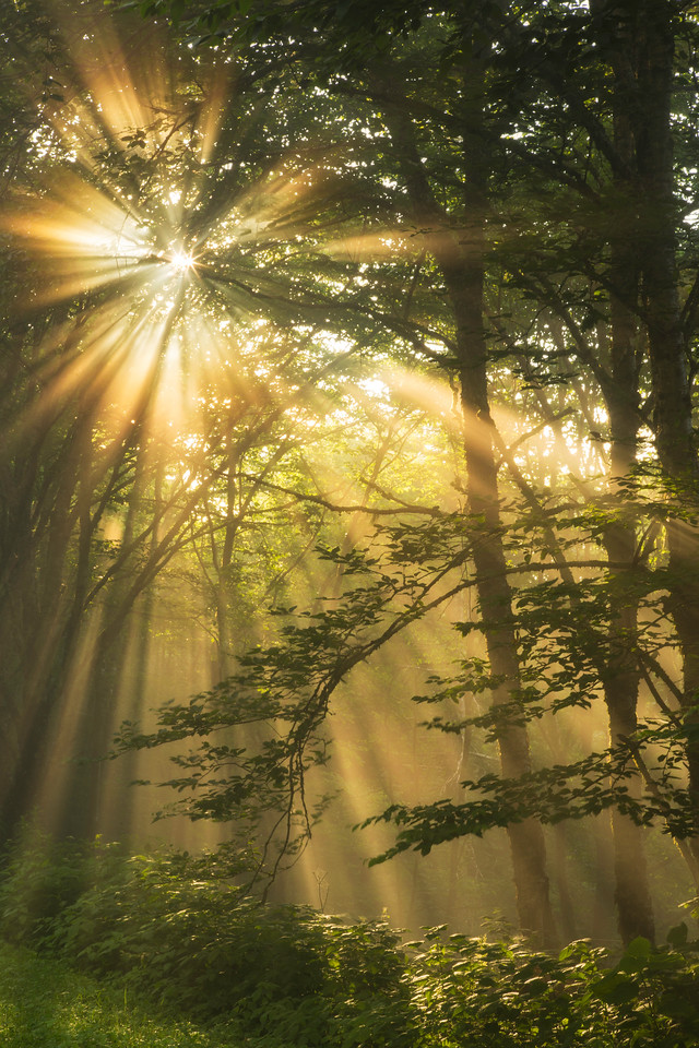 Forest Sunbeams, Great Smoky Mountains National Park