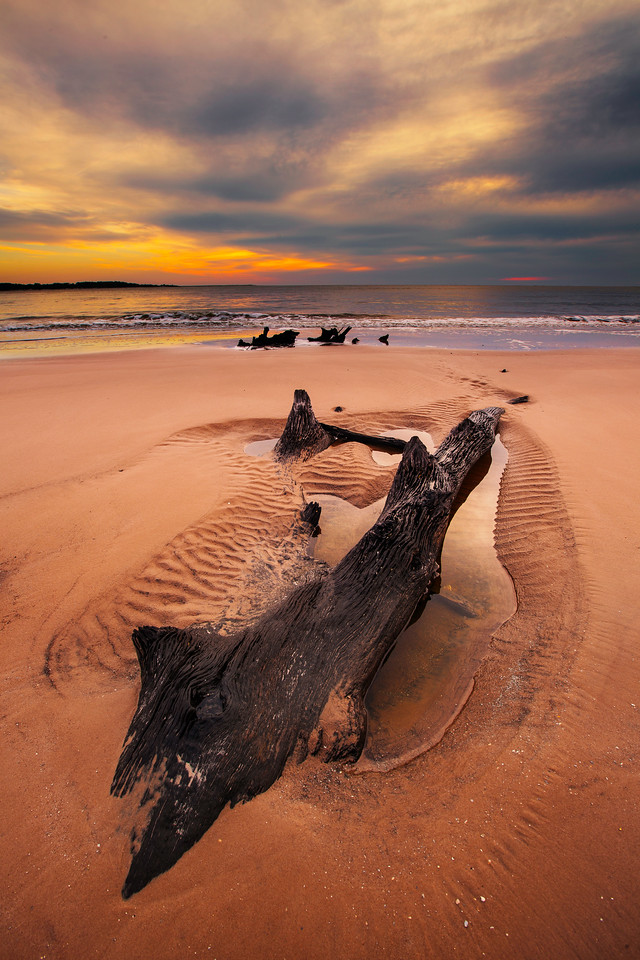 Boneyard Beach, Big Talbot Island State Park, Florida