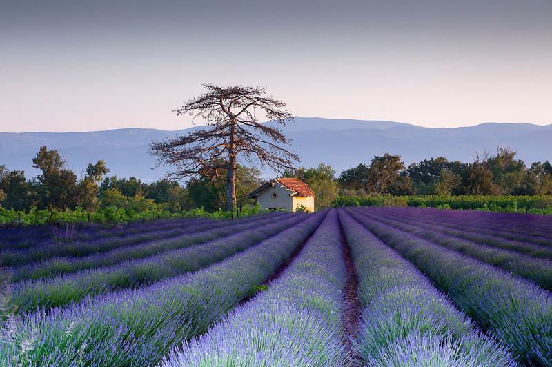 Lavender France