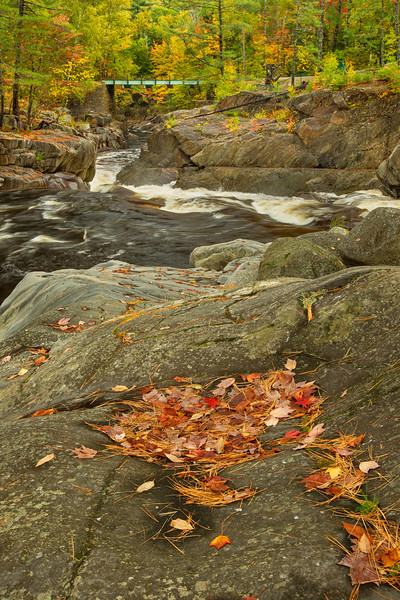 Autumn Leaves at Swift River