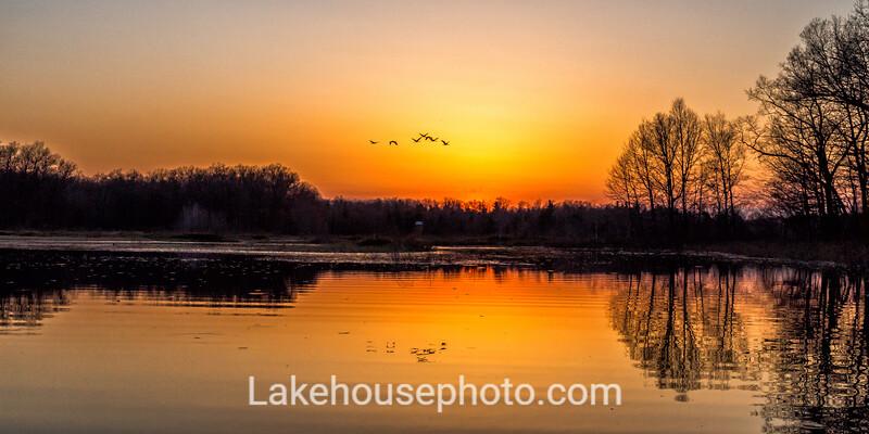 Sandhill Crane Sunset