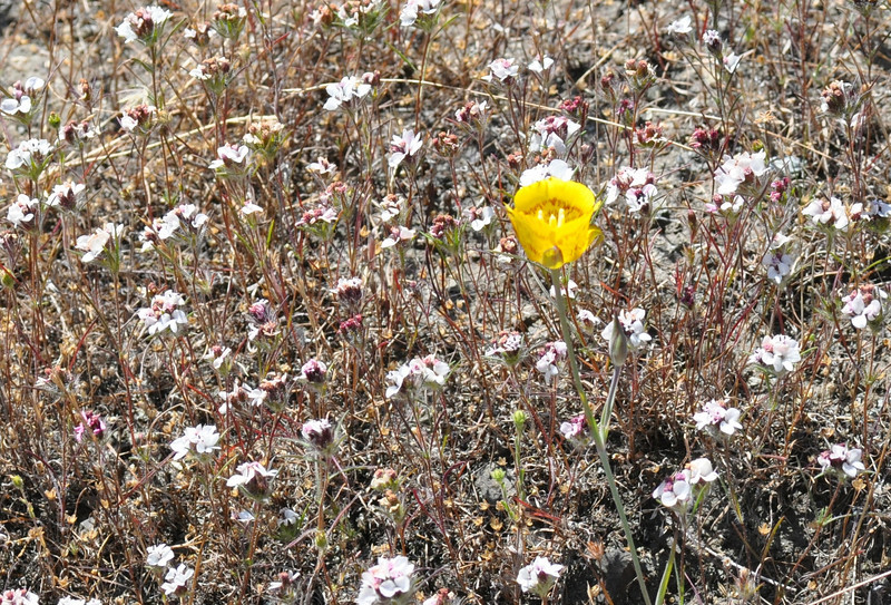 There  were plenty of the white rosinweed flowers.