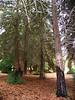 Redwood Hike 5