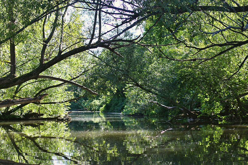 Trees stretch out from either side of the banks reaching for each other like star crossed lovers only able to intertwine their finger like branches forming a canopy above