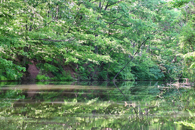 Tree filtered sunlight spreads across the water like creamer in a coffee